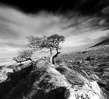 Wind & Wuthering III by Northline