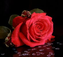 Rose with Hearts by Martie Venter