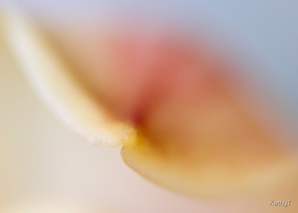 Delicate Petal by KathyT