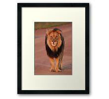 King of the Jungle Framed Print
