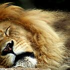 The Lion Sleeps by Jamie Lee