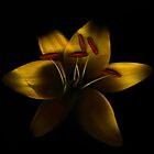 Yellow Lily by hagnes