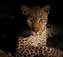 Africa's Big Cats by Michelle Sole