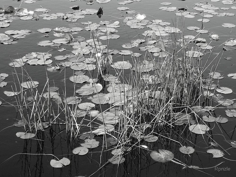 Pond Lillies Black & White by Rpnzle