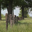 The Fenceline by AbigailJoy