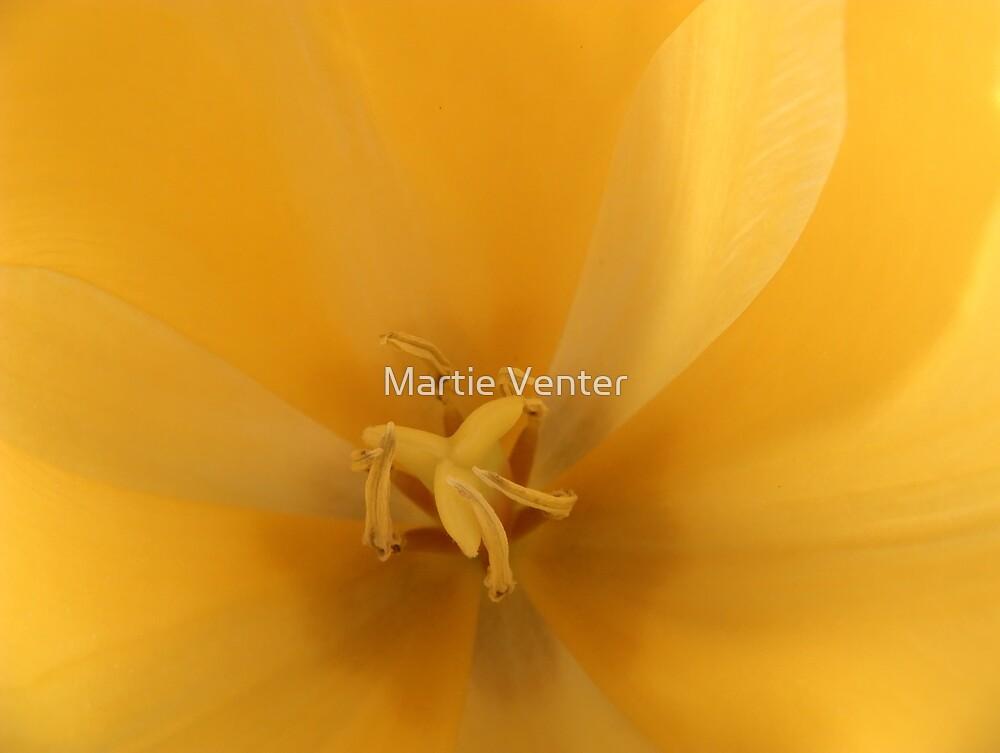 Pinwheel of Sunshine by Martie Venter