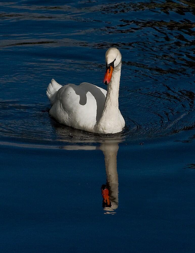 Swan II by Chris Clark