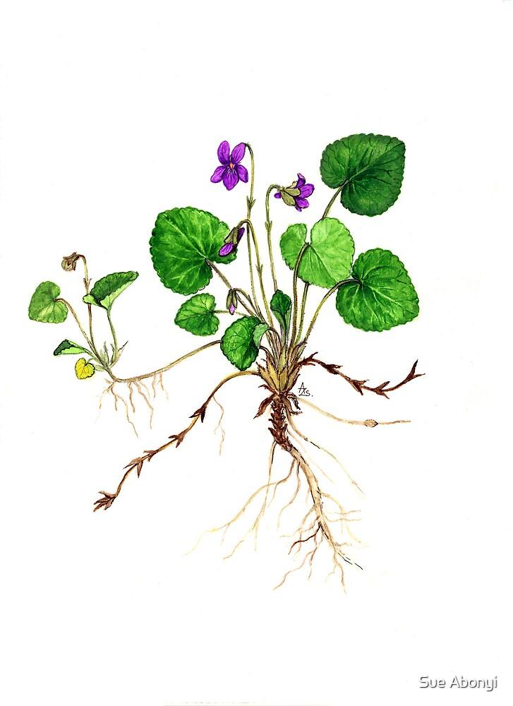 Violettes de Toulouse - Viola odorata by Sue Abonyi