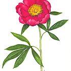 European Peony - Paeonia officinalis by Sue Abonyi