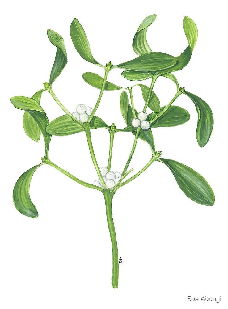 European Mistletoe - Viscum album by Sue Abonyi