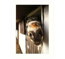 Why the Long Face? Art Print
