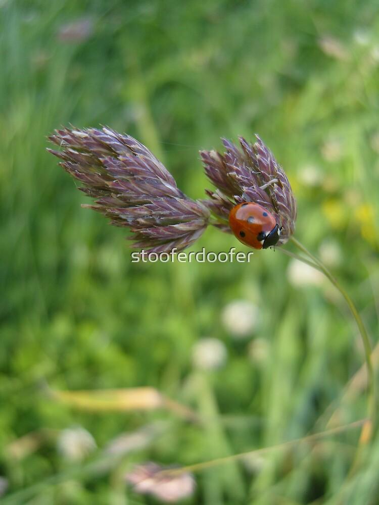 Ladybird by stooferdoofer