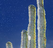 Starry Cactus by Barry L White