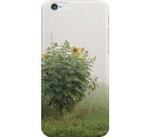 Sunflower Patch iPhone Case/Skin