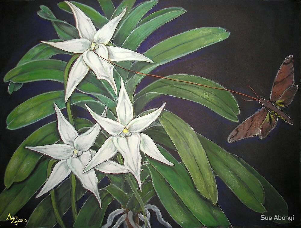 L'Étoile de Madagascar - Angraecum sesquipedale by Sue Abonyi