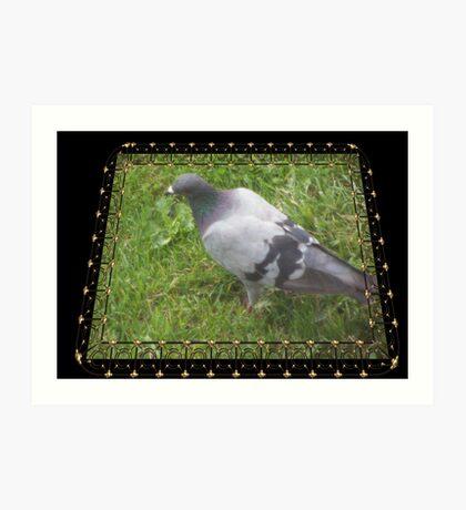 Pigeon on the Green Art Print