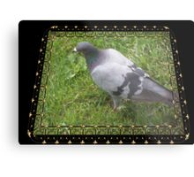 Pigeon on the Green Metal Print