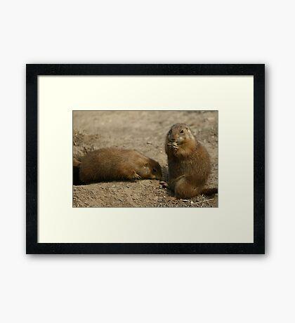 Cute Playful Groundhog Framed Print