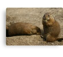 Cute Playful Groundhog Canvas Print