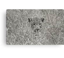 Invisible in grass Canvas Print