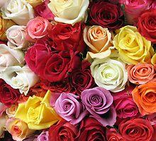 Roses by Christophe Testi