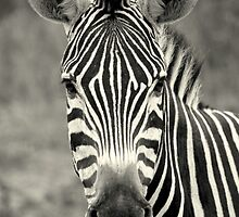 Afrcan Safari in black and white by Michelle Sole
