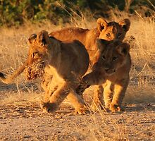 Cub play by Michelle Sole