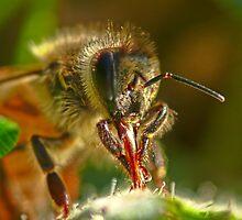 Suck that Pollen by Samuel Gundry