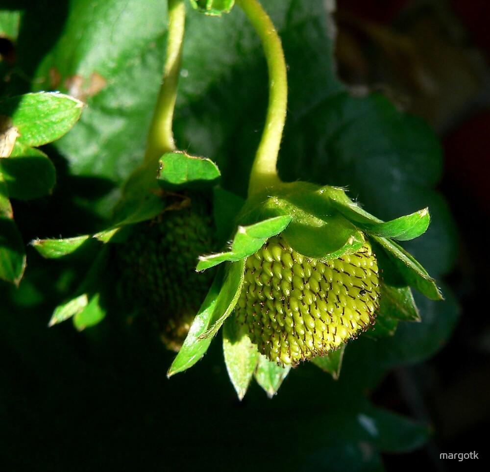 Green Strawberry by margotk