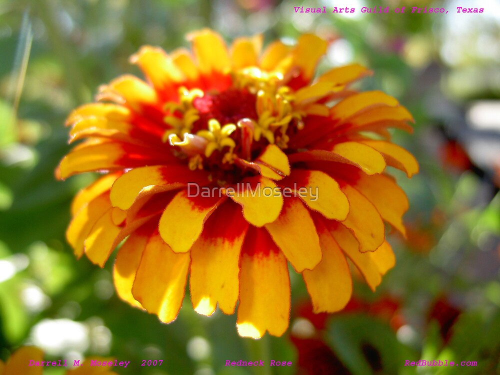 REDNECK ROSE by DarrellMoseley