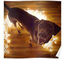 Labrador in Christmas Lights Poster