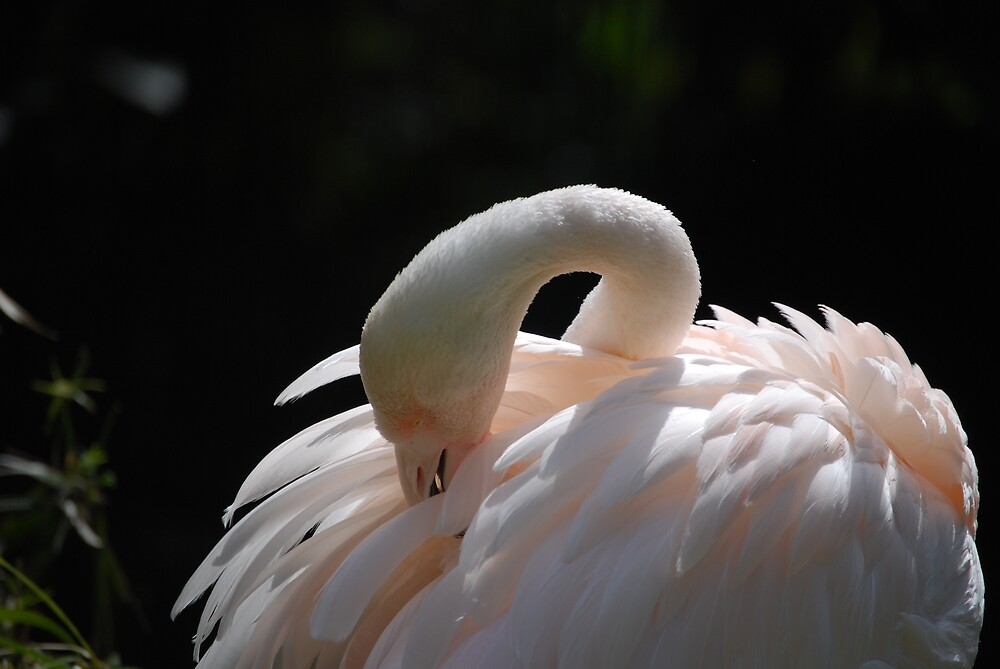 Pretty Flamingo by Princessbren2006