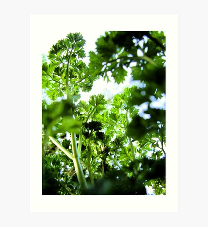 Parsley Canopy Art Print