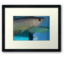 Like a Fish in Water - Kuala Lumpur, Malaysia. Framed Print