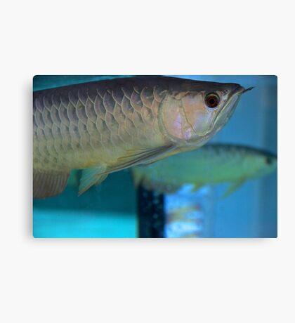 Like a Fish in Water - Kuala Lumpur, Malaysia. Canvas Print