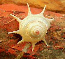 shell by Peta Hurley-Hill