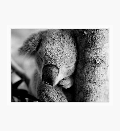 Cuddly Photographic Print