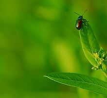 little bug by Gaby Swanson  Photography