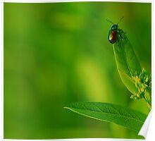 little bug Poster