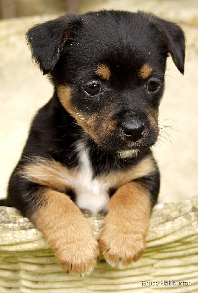 Hello Puppy! by Bruce Halliburton