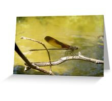 American Rubyspot Greeting Card