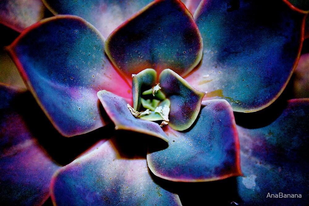 desert rose by AnaBanana