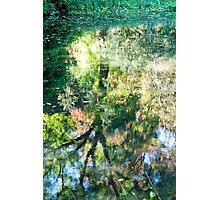 Monet at Stourhead? Photographic Print