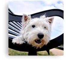 Westie, west highland terrier, Bella - just sayin', prints and gifts Canvas Print