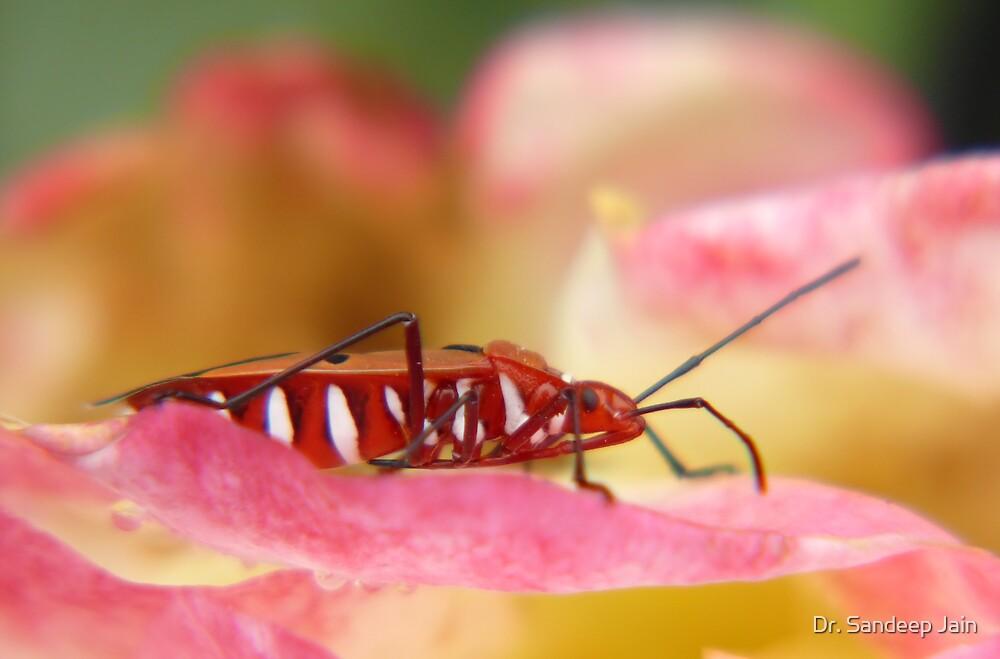 The bug on the rose by Dr. Sandeep Jain