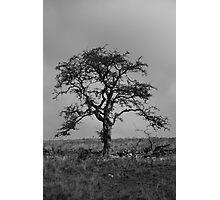 Alone...... Photographic Print