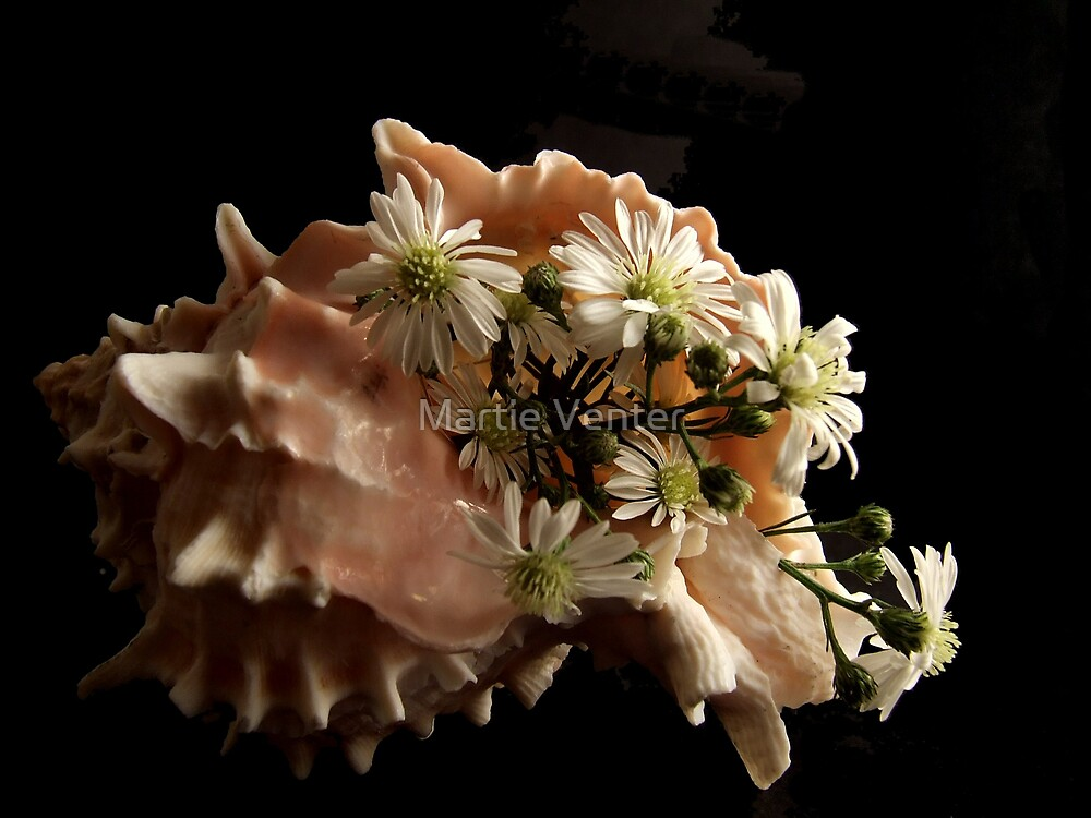 Shell with Daisies by Martie Venter