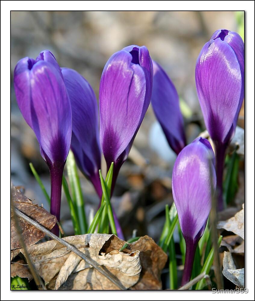Purple Flowers by Summer369