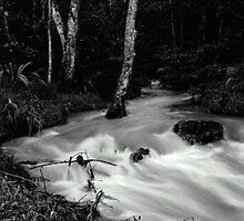 Image of a stream in flood. by photowes