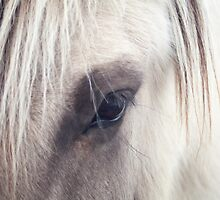 Horse's Eye by atherres